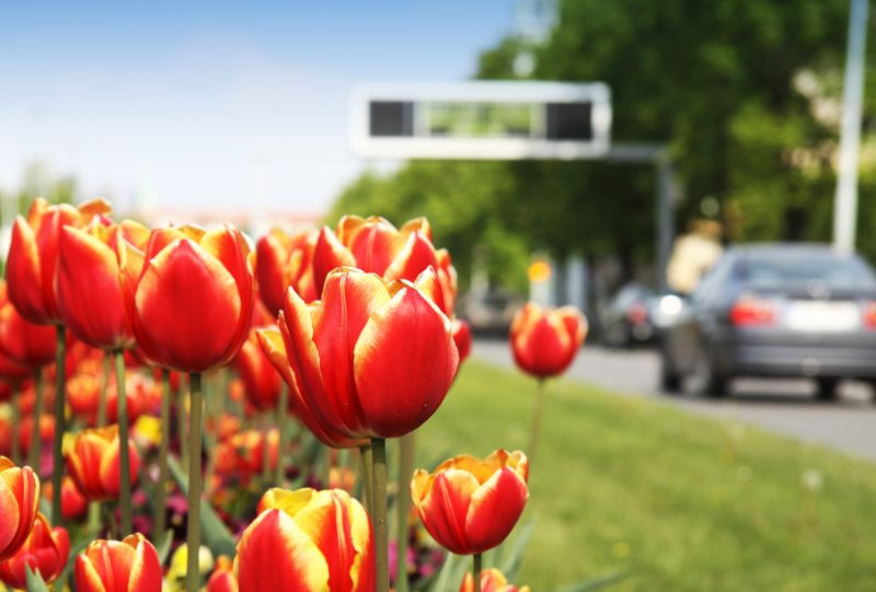 spring auto care and maintenance